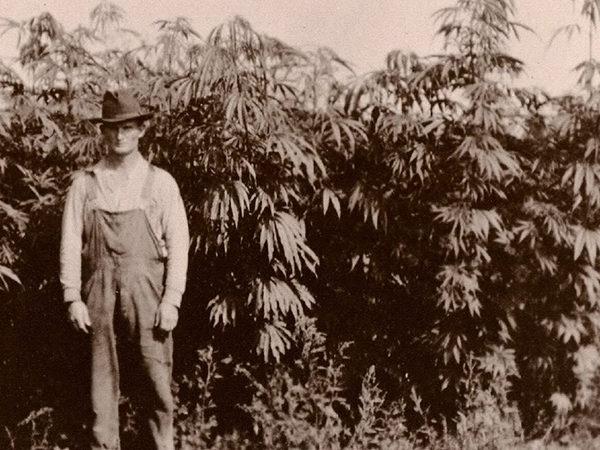 history-of-marijuana
